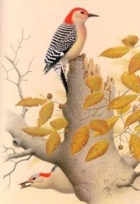 33027-Red-bellied_Woodpecker