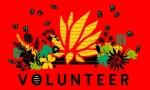 Volunteer red